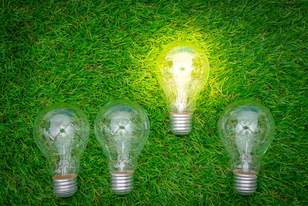 Green grass and lightbulb, why green is good for business